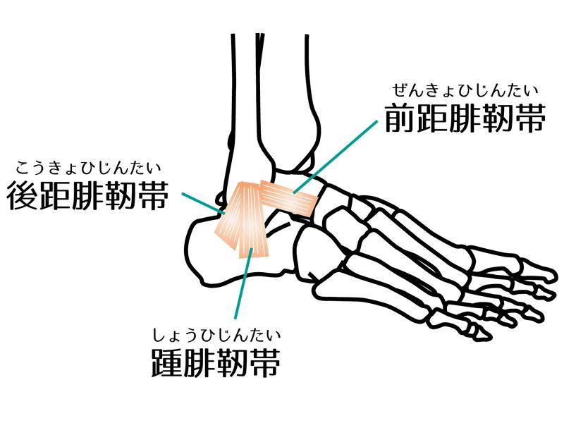 足首周りの靭帯